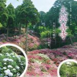 つつじ寺「大興善寺」色とりどりの5万本のつつじが山を覆う