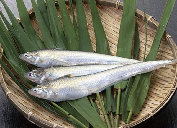 エツ漁解禁「エツ感謝祭」国内では有明海にのみ生息する希少な魚