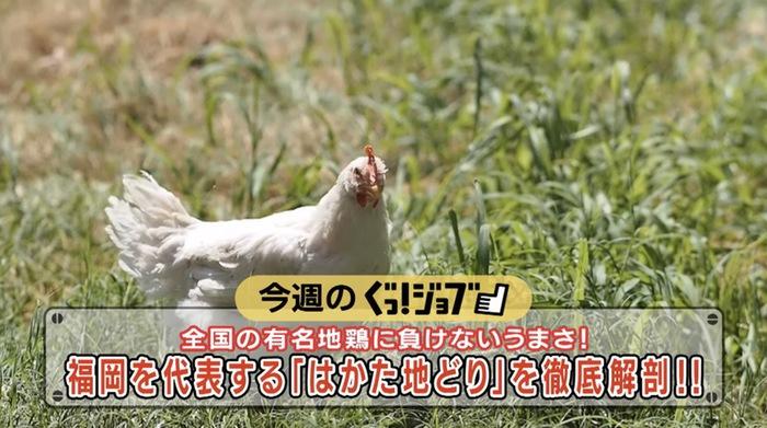 ぐっ!ジョブ~福岡を代表する「はかた地どり」久留米市の農事組合法人福栄組合を特集