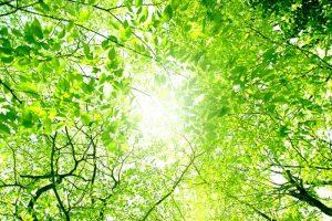 グリーンフェスティバル2018 福岡県緑化センターにて開催【久留米市田主丸町】