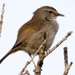 高良山で探鳥会(バードウォッチング)鳥たちのさえずりを楽しもう!