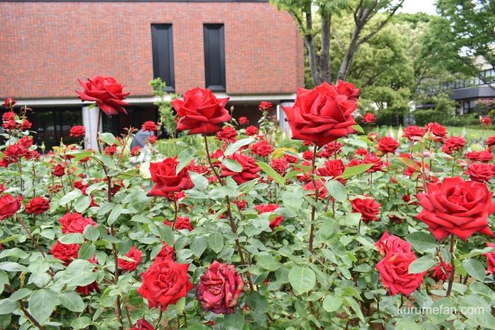石橋文化センター春のバラフェア 赤い薔薇