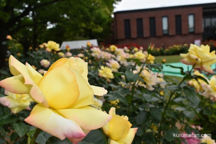 石橋文化センター春のバラフェア 色とりどりの薔薇