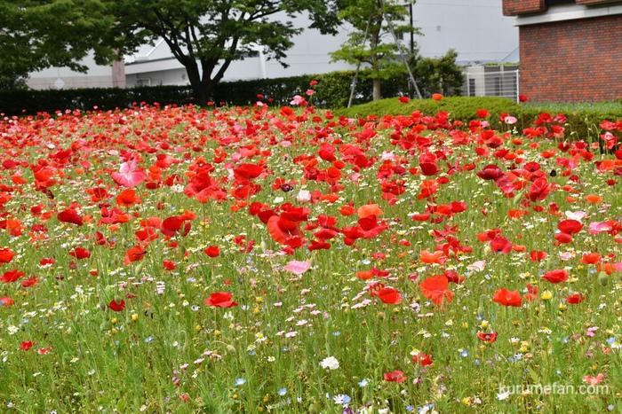 石橋文化センター 園内の花々
