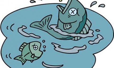 久留米市中心部 池町川で魚が大量死 漂白剤による原因か