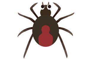 小郡市でセアカゴケグモ 民家の塀で特定外来生物の毒グモが見つかる