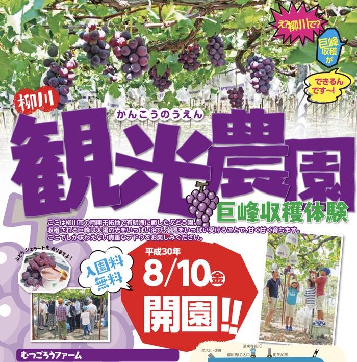 観光ぶどう園「むつごろうファーム」巨峰狩り!8月10日オープン【柳川市】