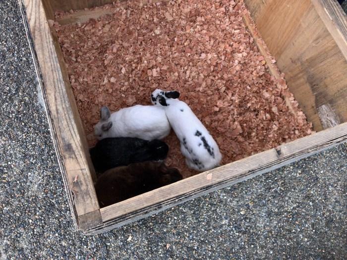 久留米市下水道フェア ふれあい動物コーナー