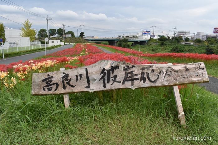 久留米市 高良川沿いの遊歩道 枝光橋付近の彼岸花