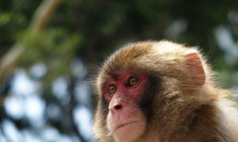 朝倉市東小田小学校付近で猿が出没 近づかないよう注意