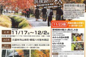 柳坂ハゼ祭り 新・日本街路樹100景にも選ばれている久留米市山本町の櫨並木