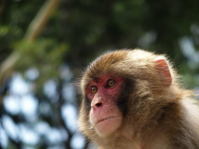 猿が徘徊 不用意に近づかないように注意