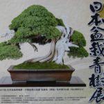 第28回 日本盆栽青樹展 全国各地から応募された約100点盆栽が展示