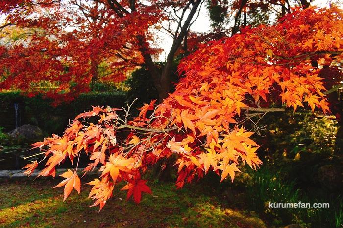 石橋文化センター園内の紅葉