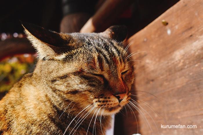 如意輪寺 本殿前の猫