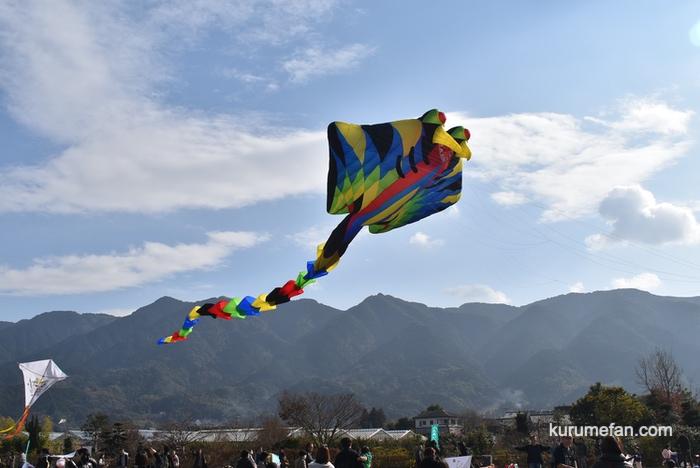 久留米ふれあい農業公園 たこあげ大会 巨大エイの凧