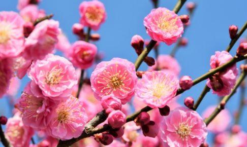 石橋文化センター春の花まつり2019