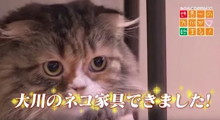 世界一の九州が始まる!ネコ好きが注目するネコ家具の人気を追う【大川家具】