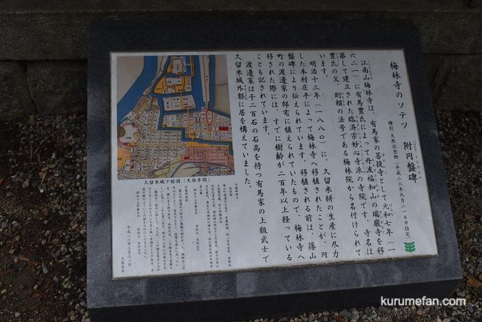 梅林寺 樹齢200年以上のソテツ