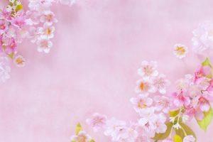 陸上自衛隊小郡駐屯地桜並木一般開放 3/29はライトアップも!【小郡市】