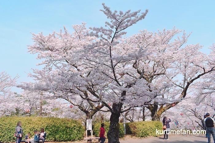 久留米市 発心公園の桜 2019年 花見