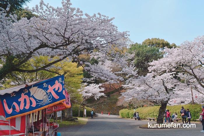 久留米市 発心公園の桜 出店