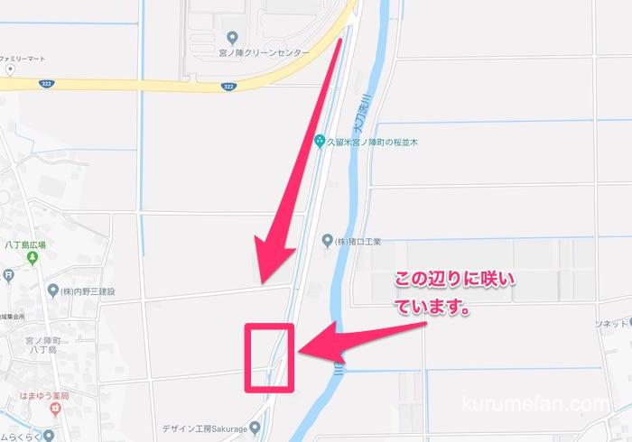 Miyanojin sakuranamiti kawatuzakura map 0000 2