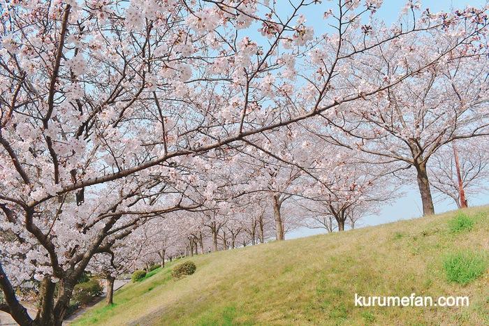 中千出公園の桜並木