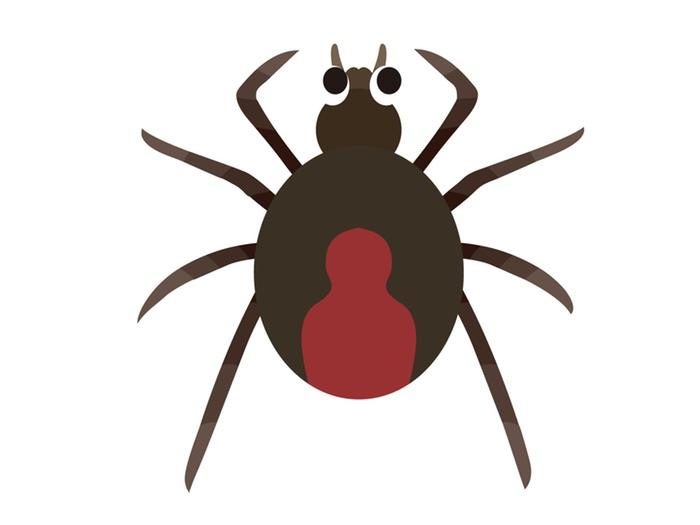 大牟田市内で毒グモ「セアカゴケグモ」1匹見つかる