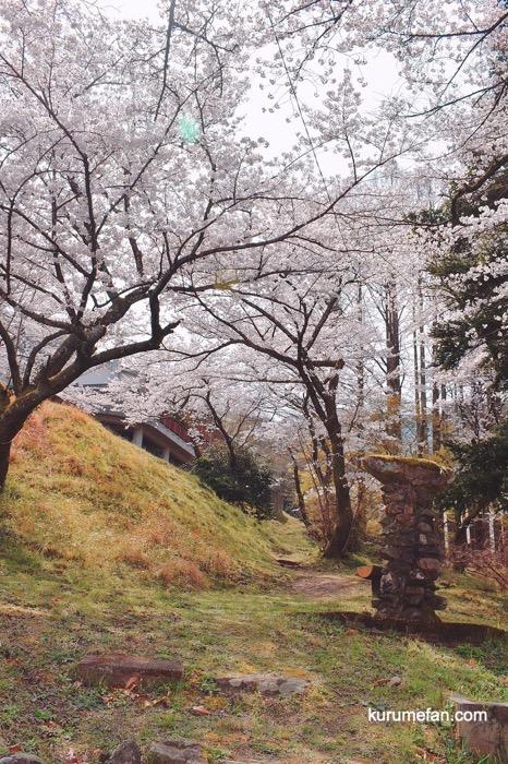 Tanusimaru hirabarukouen 0021