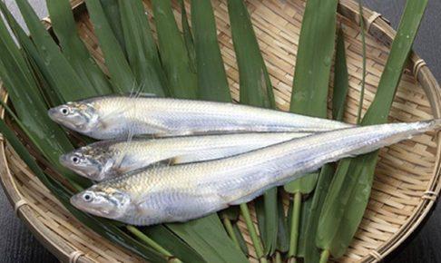 エツ漁解禁とエツ感謝祭 有明海にのみ生息する希少な魚 久留米市城島の風物詩