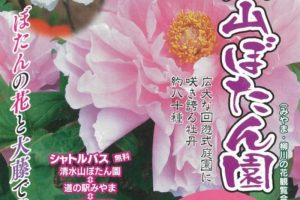 みやま市 清水山ぼたん園 広大な回遊式庭園に咲き誇る約80種の牡丹