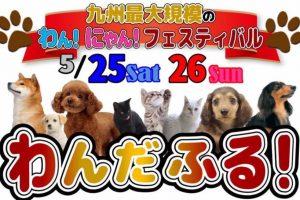 わんだふる 九州最大級のペットフェス ペット雑貨やペットフードなど出店