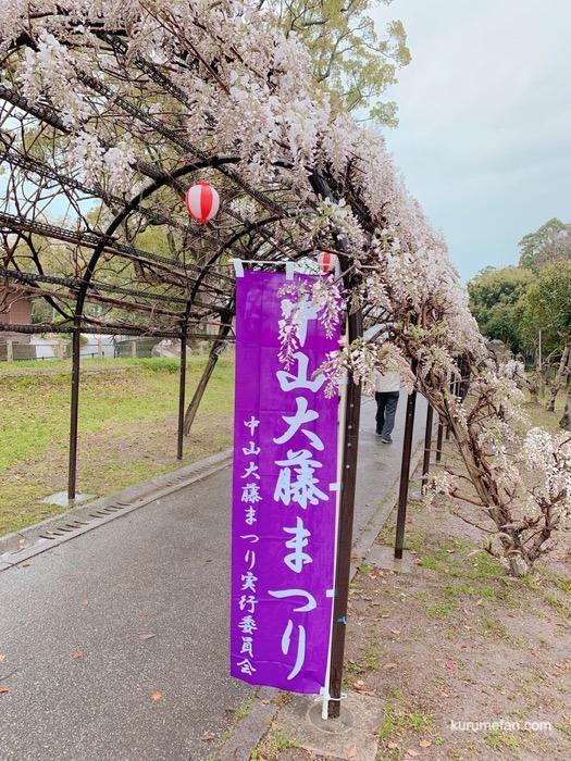2019年4月14日 中山大藤の開花状況