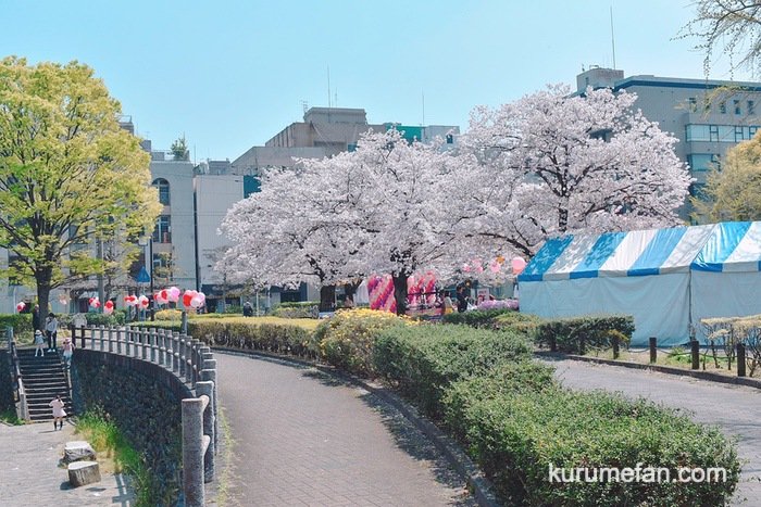 久留米市日吉町にある三本松公園の桜