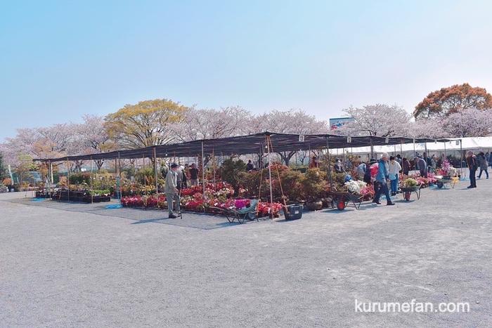 第62回 久留米つつじまつり クルメツツジ、一般観賞樹、果樹、花、盆栽、鉢物などを販売