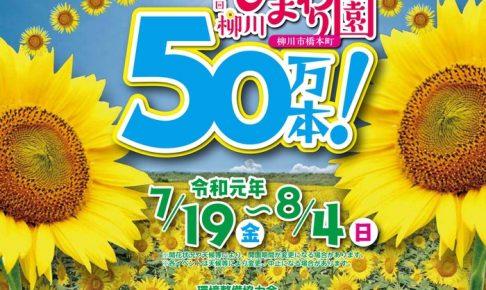 柳川ひまわり園2019 50万本のひまわり!7/19開園 花火も!開花状況