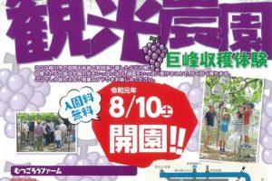 柳川観光農園 巨峰収穫体験 甘く育ったぶどう!8月10日オープン