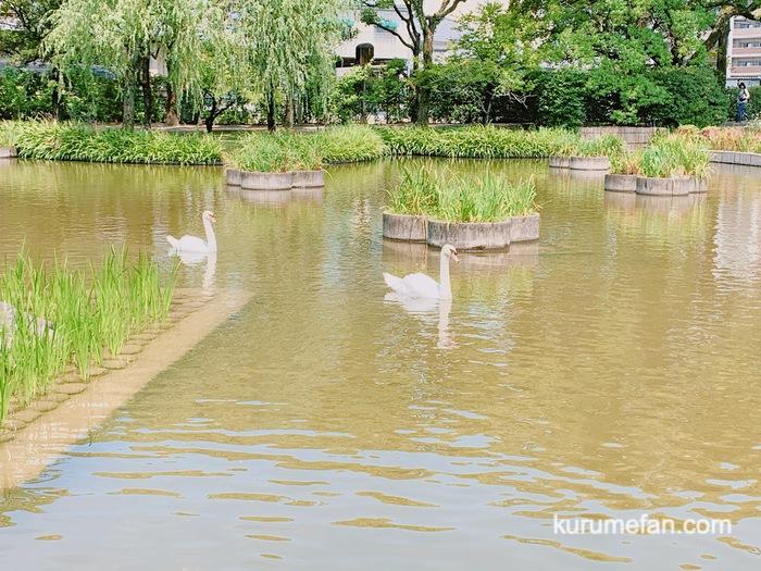 石橋文化センター 白鳥