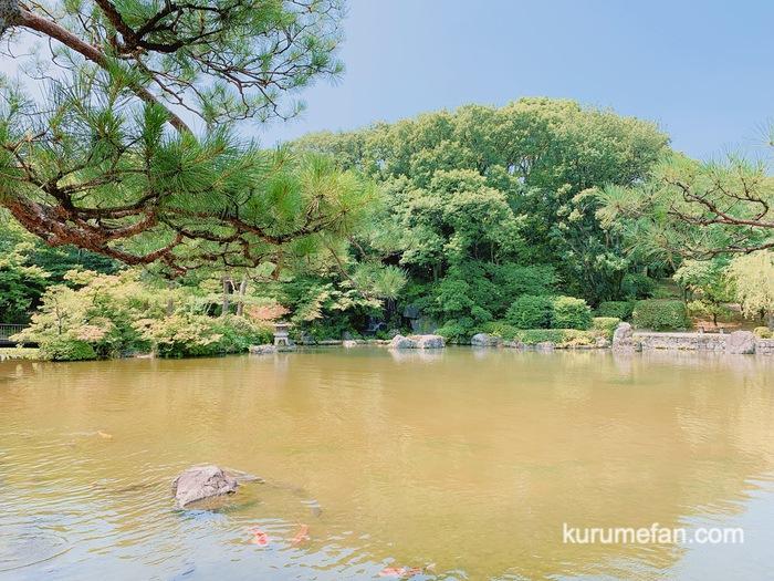 石橋文化センター 園内の池で鯉にエサやり