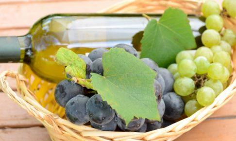 久留米市「巨峰ワイン祭り」ワイン祭り限定試飲販売や足踏みジュース搾り体験