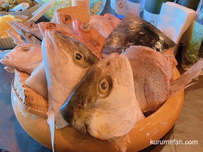 OSAKANA DINING OBANA 合川店 桶から好きな魚が選べる!MARUGOTO(まるごと)鮮魚定食