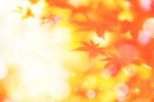 ブリヂストンけやき通り 秋のふれあい祭 色づくけやき並木【久留米市】