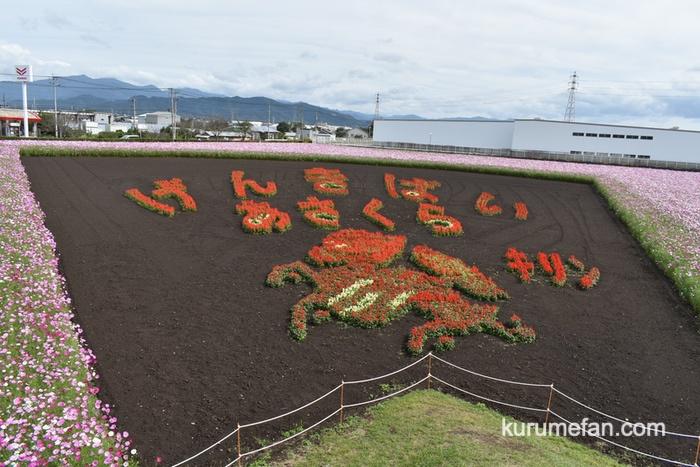 キリンビール福岡工場 コスモスパノラマ展望台からのコスモス「げんきばい あさくら キリン」フラワーアート