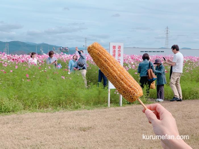 キリンビール福岡工場 コスモスフェスタ2019 園内でランチ 焼きとうもろこし