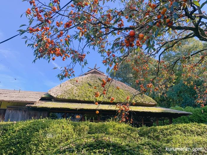 水縄茶寮(みのうさりょう)自然に囲まれた安土桃山時代の古民家と柿の木