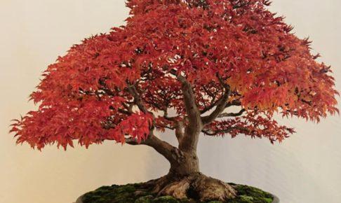 日本盆栽青樹展2019 日本の香り高い芸術「盆栽」の展示会 12月開催