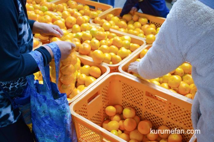 久留米市 市場祭り 青果棟 みかんの詰め放題
