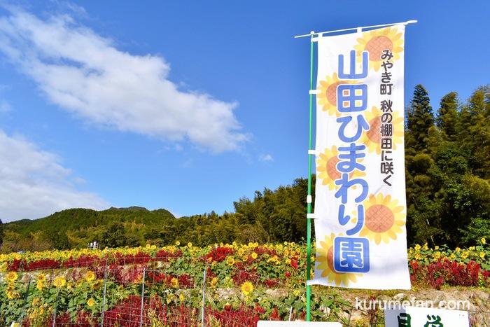 みやき町 秋の棚田に咲く山田ひまわり園