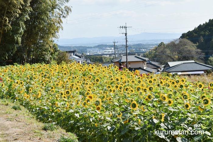みやき町 山田ひまわり園